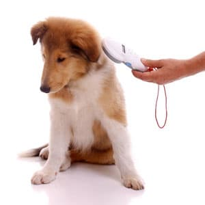 dog getting scanned with rfid reader